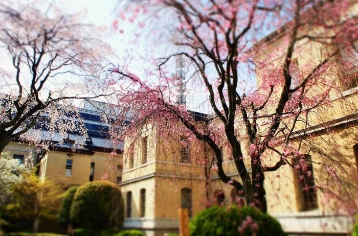 京都府庁1 (700x462).jpg