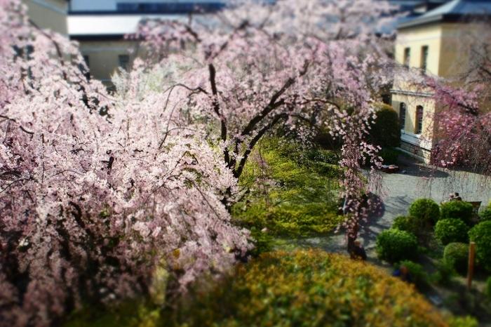 京都府庁6 (700x466).jpg