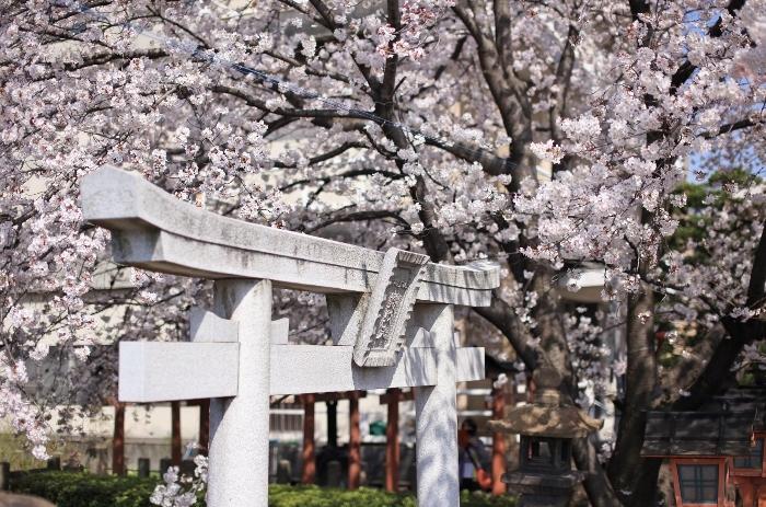 六孫王神社5 (700x463).jpg