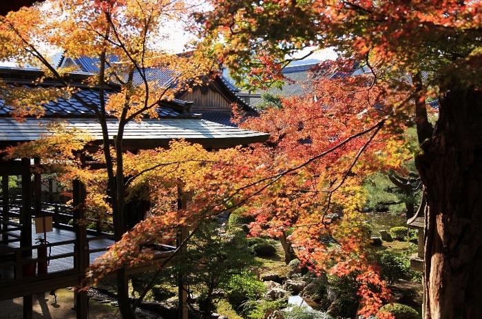 大覚寺1 (700x463).jpg