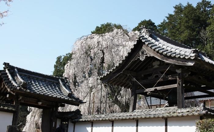 大野寺1 (700x432).jpg