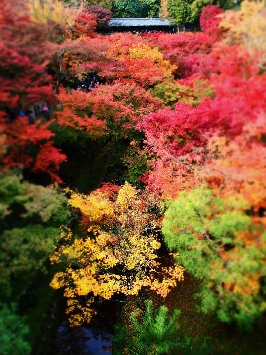 東福寺2 (525x700).jpg