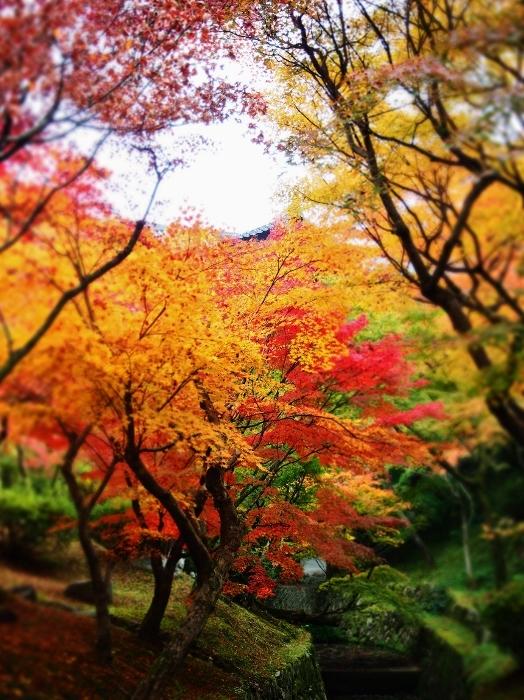 東福寺3 (524x700).jpg