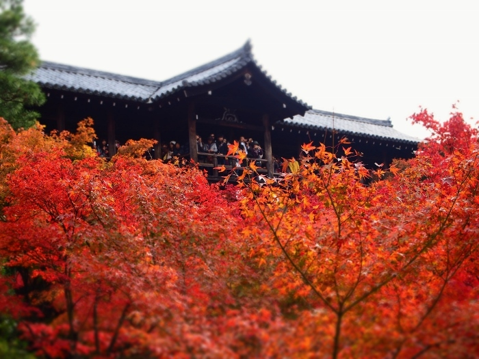 東福寺4 (700x525).jpg