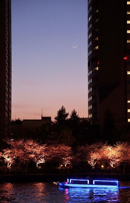 桜ノ宮3 (449x700).jpg