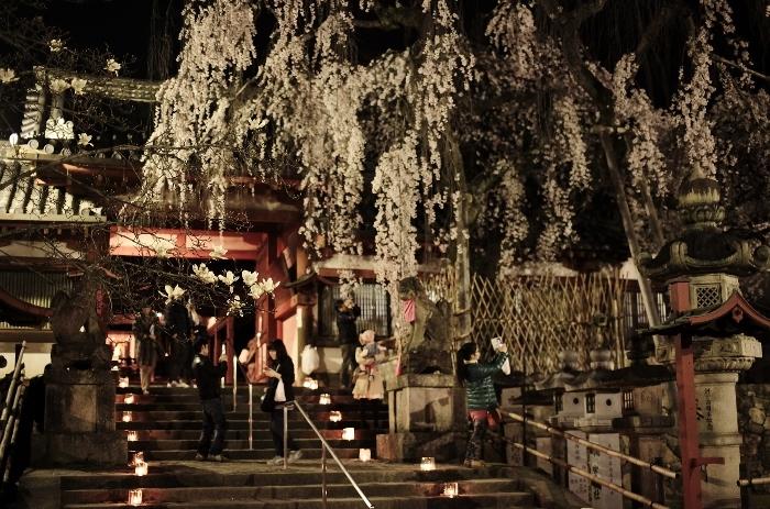 氷室神社6 (700x463).jpg