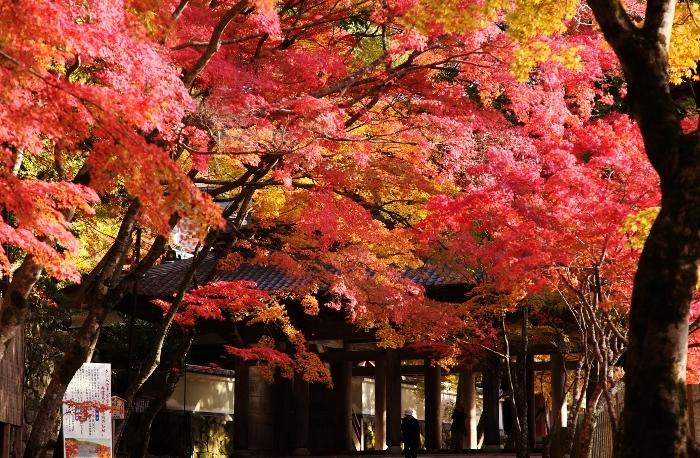 永源寺9 (700x458).jpg