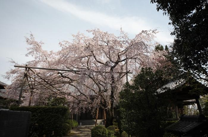 西迎寺1 (700x462).jpg