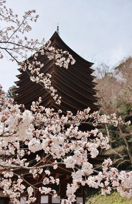 談山神社8 (454x700).jpg