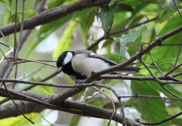 鳥2 (700x486).jpg