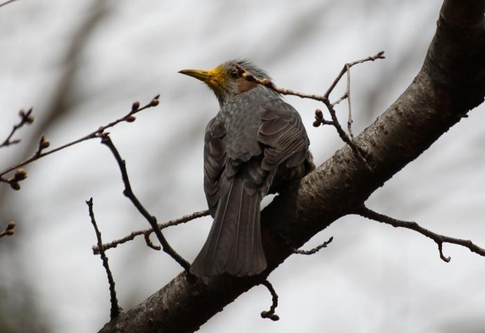 鳥3 (700x481).jpg